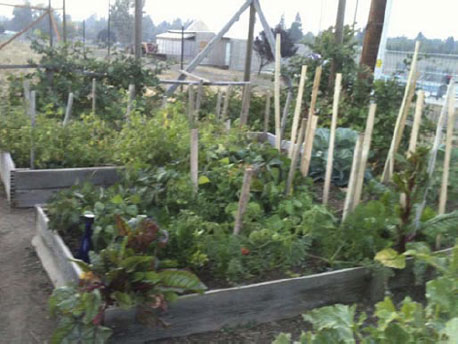 CommunityGarden_03