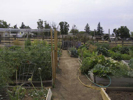CommunityGarden_04